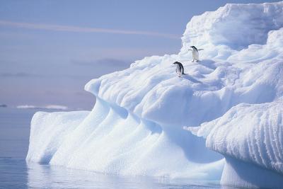 Adelie Penguins on Iceburg-DLILLC-Photographic Print