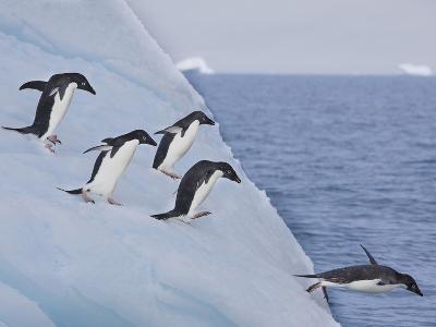 Adelie Penguins, Paulet Island, Antartica, Antarctic-Hugh Rose-Photographic Print