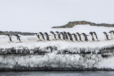 Adelie Penguins (Pygoscelis Adeliae) at Breeding Colony at Brown Bluff, Antarctica, Southern Ocean-Michael Nolan-Photographic Print