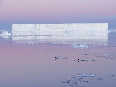 Adelie Penguins, Pygoscelis Adeliae, on the Weddell Sea in Front of a Tabular Iceberg-Jeff Mauritzen-Photographic Print