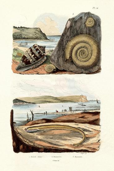 Admiral Cone, 1833-39--Giclee Print