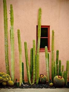 Adobe Cactus, 2015