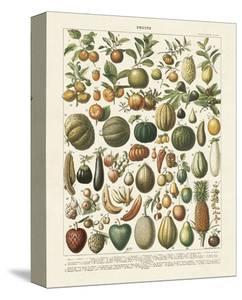 Fruits I by Adolphe Millot