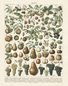 Fruits II by Adolphe Millot