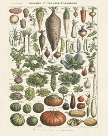 Legumes I by Adolphe Millot