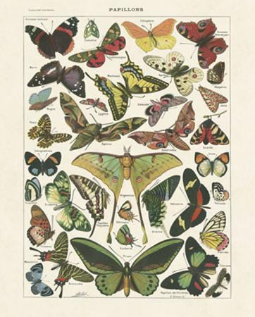 Papillons I