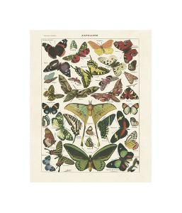 Papillons I by Adolphe Millot