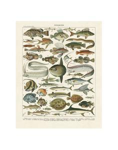 Poissons I by Adolphe Millot