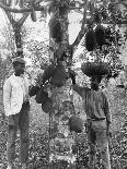 Banana Carriers, Jamaica, C1905-Adolphe & Son Duperly-Giclee Print
