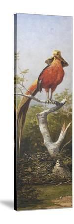Oiseau exotique rouge