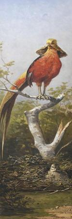 Oiseau exotique rouge by Adolphe Yvon