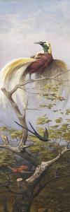 Oiseau by Adolphe Yvon