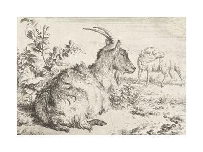 Lying goat, 1670