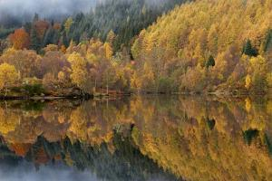 Reflections of Autumn Colours In Loch by Adrian Bicker