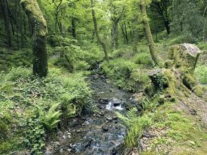 Stream And Woodland In Devon by Adrian Bicker