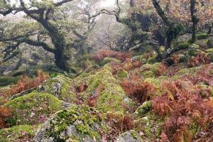 Wistman's Wood, Dartmoor by Adrian Bicker