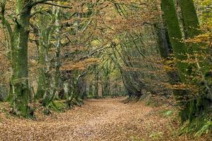Woodland Path by Adrian Bicker