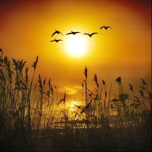 Dawn Flight by Adrian Campfield