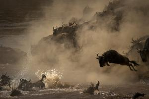 The Great Wildebeest Migration by Adrian Wray