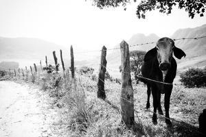 Um Mundo a Parte... by Adriana Casellato