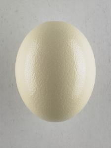 Egg by Adrianna Williams