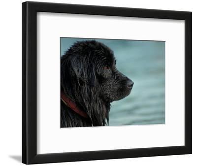 Black Newfoundland Dog Near Water