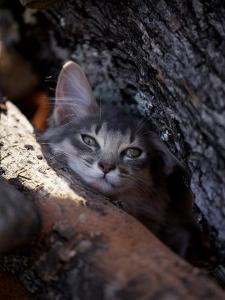 Somali Cat in Tree by Adriano Bacchella
