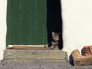 Tabby Cat Resting in Open Doorway, Italy by Adriano Bacchella