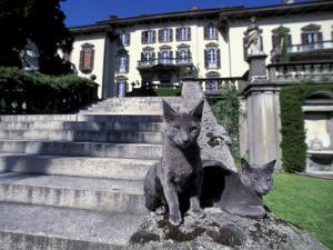 Two Russian Blue Cats Sunning on Garden Stone Steps, Italy by Adriano Bacchella
