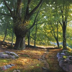 Luce nel bosco by Adriano Galasso