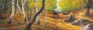 Sentiero nel bosco by Adriano Galasso
