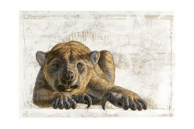 A Marsupial Lion, Thylacoleo Carnifex