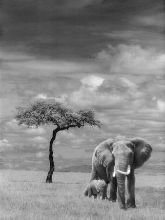 https://imgc.artprintimages.com/img/print/adult-african-elephant-with-calf_u-l-pzl3o70.jpg?p=0