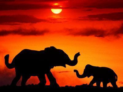 https://imgc.artprintimages.com/img/print/adult-and-young-elephants-sunset-light_u-l-pxytar0.jpg?p=0