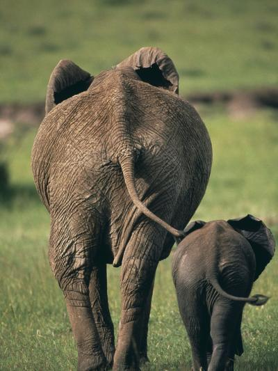 Adult Elephant and Baby--Photographic Print