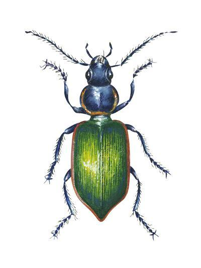 Adult Ground Beetle (Carabidae,), Insects-Encyclopaedia Britannica-Art Print