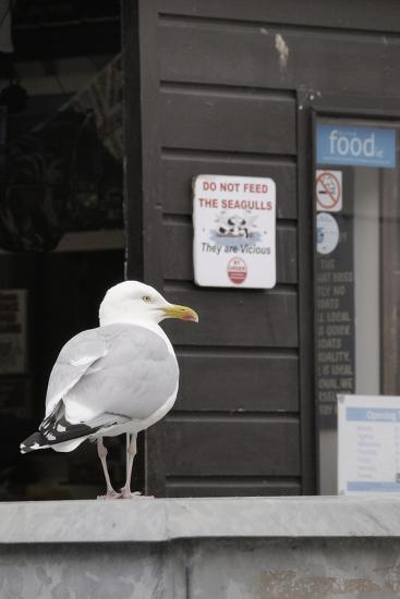 Adult Herring Gull (Larus Argentatus) Standing Near Entrance to Fishmonger's Shop-Nick Upton-Photographic Print