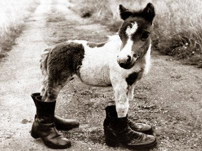 Adult Horse with Giant Boots--Photographic Print