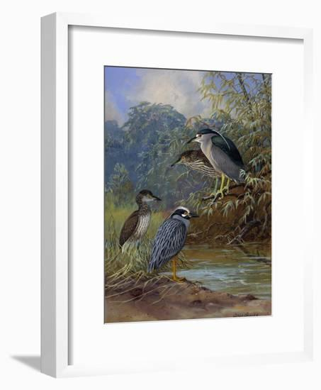 Adult Night Heron's and their Young Find Water-Allan Brooks-Framed Giclee Print