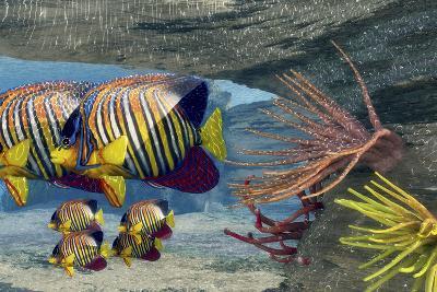 Adult Royal Angelfish Parents Guarding their Young-Stocktrek Images-Art Print