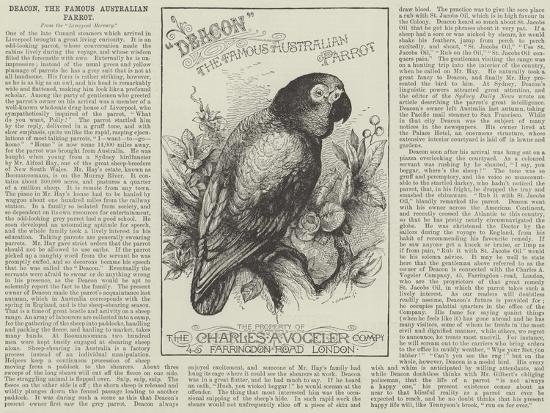 Advertisement, Deacon, the Famous Australian Parrot--Giclee Print