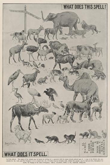 Advertisement, Ellimans Embrocation--Giclee Print