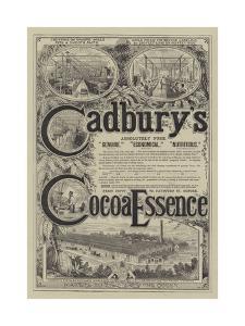 Advertisement for Cadbury's Cocoa Essence