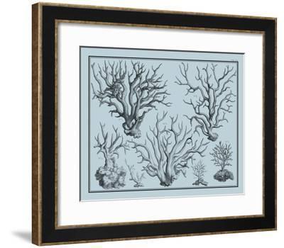Aegean Coral on Blue I--Framed Art Print