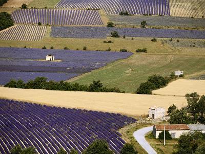 Aerial Lavender Field-David Barnes-Photographic Print