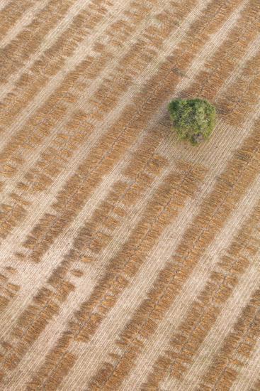 Aerial Shot of Field at Bagan, Myanmar-Harry Marx-Photographic Print