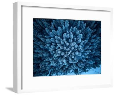 Aerial View from above of Winter Forest Covered in Snow. Pine Tree and Spruce Forest Top View. Cold--Framed Photographic Print