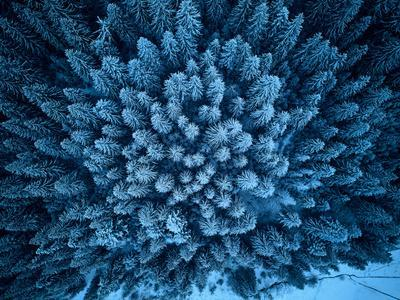 https://imgc.artprintimages.com/img/print/aerial-view-from-above-of-winter-forest-covered-in-snow-pine-tree-and-spruce-forest-top-view-cold_u-l-q1gkrb30.jpg?p=0