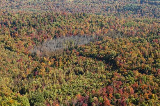 Aerial View of a Dense Forest in Central Maine During Autumn-Hannele Lahti-Photographic Print