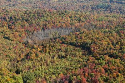 https://imgc.artprintimages.com/img/print/aerial-view-of-a-dense-forest-in-central-maine-during-autumn_u-l-pyy7ju0.jpg?p=0